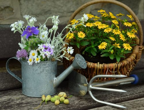 Cleaning jobs for autumn flower maid - Gardening in october a brief to do list ...
