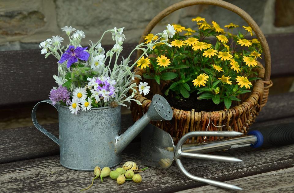 A Brief Spring Gardening Guide